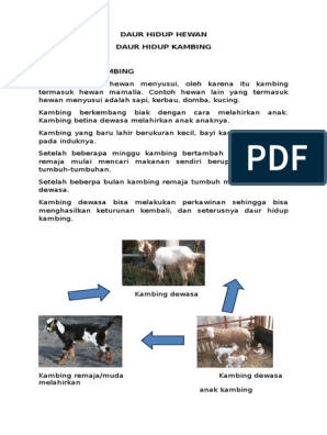 550+ Gambar Daur Hidup Hewan Anjing Terbaru