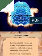 La Corteza Cerebral (1)