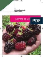 Manual El cultivo de la  mora.pdf