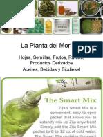 Laplantadelmoringahojassemillasfrutosproductos 110913151718 Phpapp02 (1)