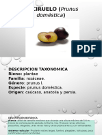 EL CIRUELO (Prunus doméstica)