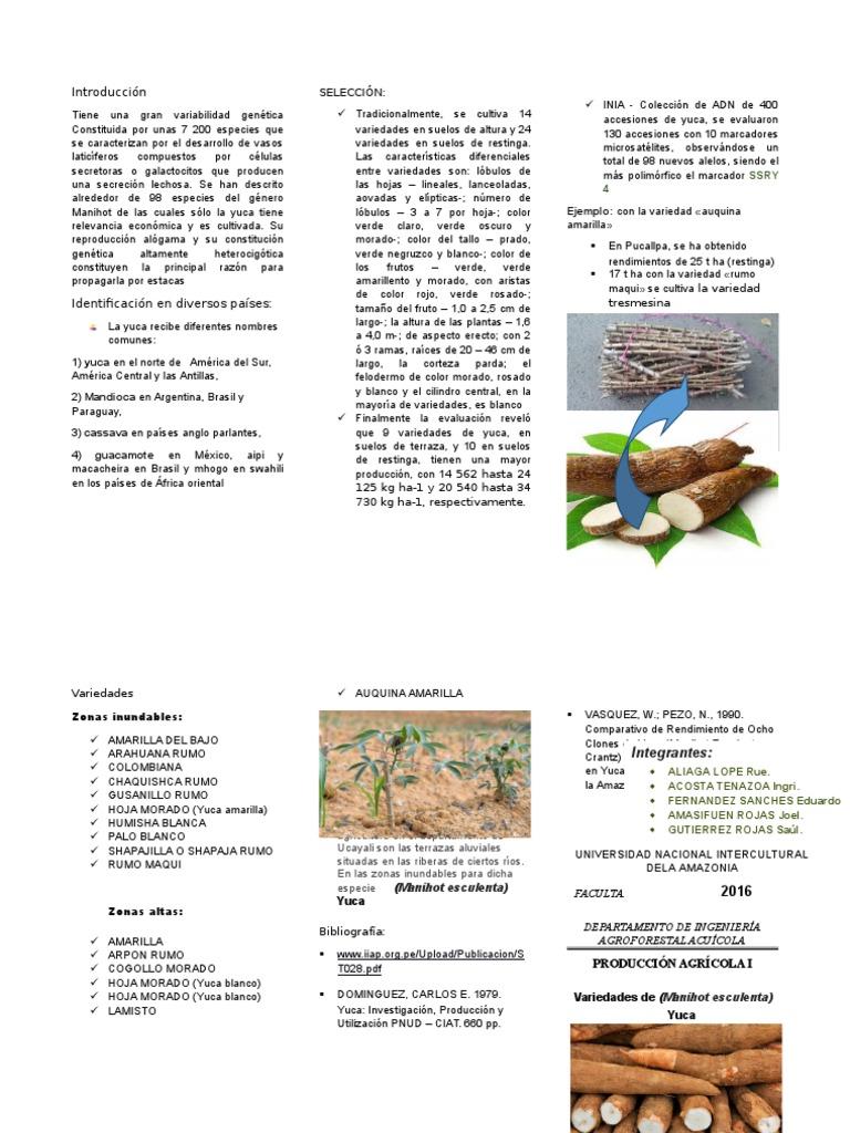 Triptico De Yuca Botánica Horticultura Y Jardinería