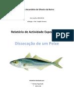 Relatório-peixe