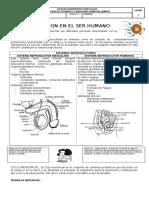 87397712-Guia-n-2-Reproduccion-Humana.docx