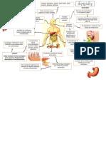 Mapa Digestion
