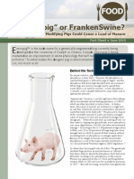 """""""Enviropig"""" or FrankenSwine? Why Genetically Modifying Pigs Could Cause a Load of Manure"""