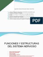 Act. Funciones y Órganos Del Sistema Nervioso