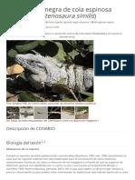 Iguana Negra de Cola Espinosa -Ctenosaura-similis