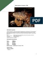 Iguana Iguana CONABIO II