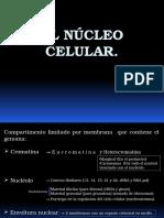 1 Nucleo