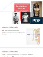 anatomy muscles