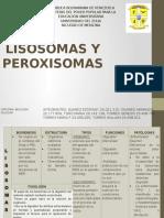 Diapositivas Lisosomas y Peroxisomas