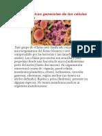 Características Generales de Las Células Procariotas.docx-gavetas
