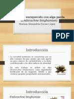Baguette Enriquecido Con Alga Parda Endarachne Binghamiae (1)