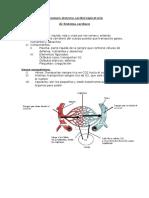 Resumen Sistema Cardiorespiratorio