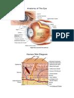 Anatomy of the Eye and Skin