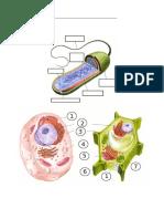 Célula Procariota, Animal y Vegetal