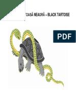 Broasca Țestoasă Neagră – Black Tartoise