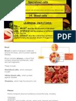 Lesson 14 Blood Cells