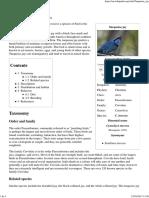 Turquoise Jay - Wikipedia