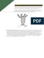 Sistema Nervioso y Excretor Invertebrados