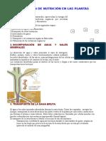 Nutrición y Reproducción Vegetal (Castellano Imprimir)