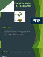 Funciones de Relación de Las Plantas