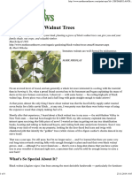 Planting Black Walnut Trees