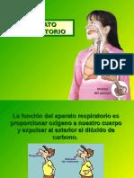 aparatorespiratorio-120121112221-phpapp01