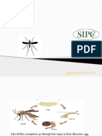 Mosquito   mosquito control bangalore   mosquito control
