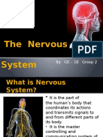 The Nervous System - Psychology