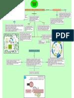 Planificacion Del Manejo Sustentable Diagnostico Del Predio Mapaconceptual