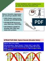 4 Struktur Ekspresi Gen Secara Molekuler