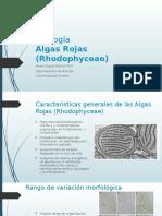 Ficología 3 rhodophyta