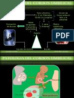 Cordon Umbilical i[1]