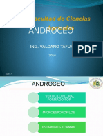 Androceo y Gineceo
