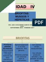 u 4 - Briofitas Clases