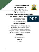 INFORME-ARROCITO