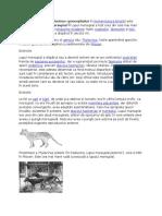 Lupul Marsupial