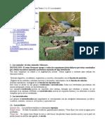 Resumen Animales (Quijano)