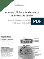 2 Tipos de Célula y Estructura Celular