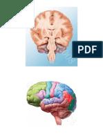 Imágenes Sistema Nervioso