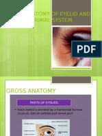 Eyelid Anatomy