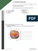 examen_diagnostico