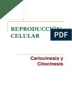 Cariocinesis y citocinesis
