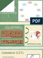 Biosintesis de Colesterol