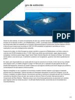 El Atún Rojo en Peligro de Extinción