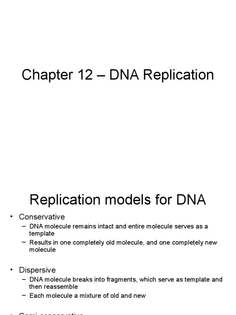 When a cell copies a dna molecule, each strand serves as a.