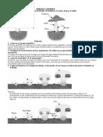 ACT_HONGOS LÍQUENES 3-3.doc