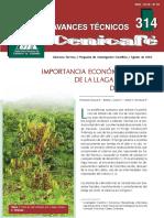 Importancia Economica de La Llaga Macana  Del Cafeto